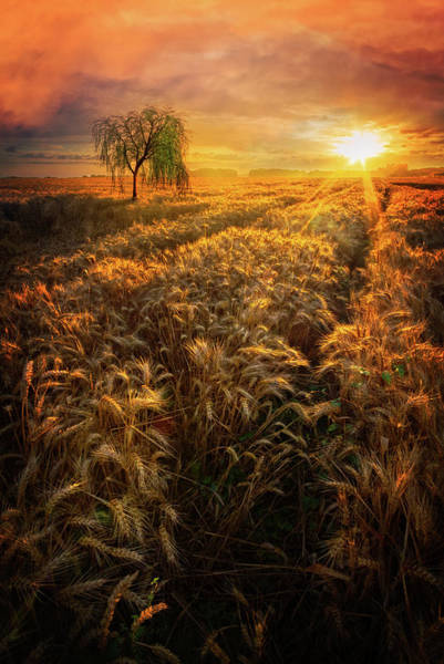 Photograph - Evening Wheat Fields by Debra and Dave Vanderlaan