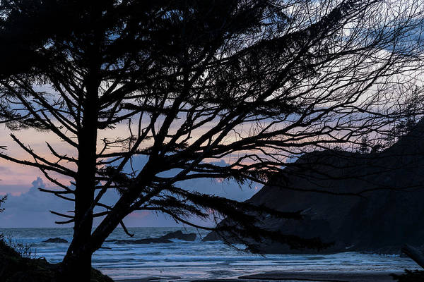 Photograph - Eventide Silhouettes by Robert Potts
