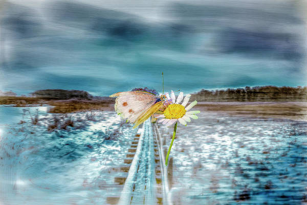 Photograph - Ever Seen by Leif Sohlman