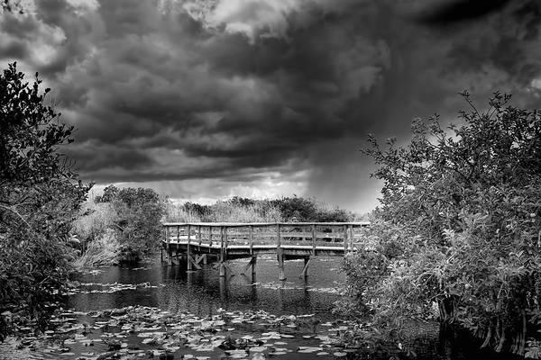 Everglade Photograph - Everglades 0823bw by Rudy Umans
