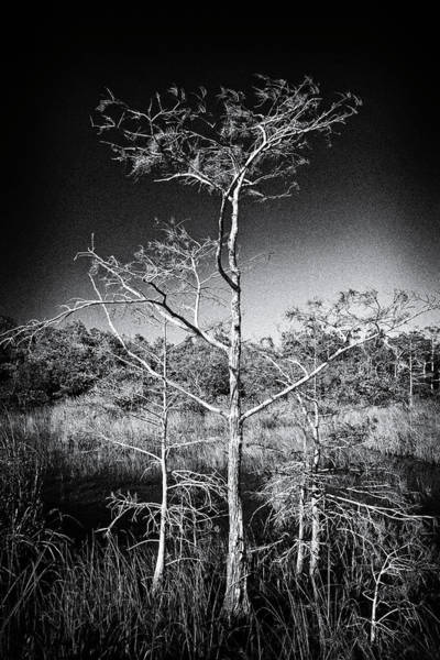 Photograph - Everglades 1529bw by Rudy Umans