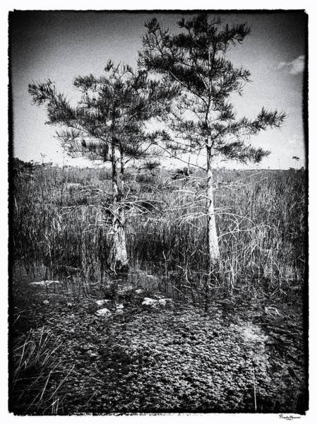 Photograph - Everglades 1929bw by Rudy Umans