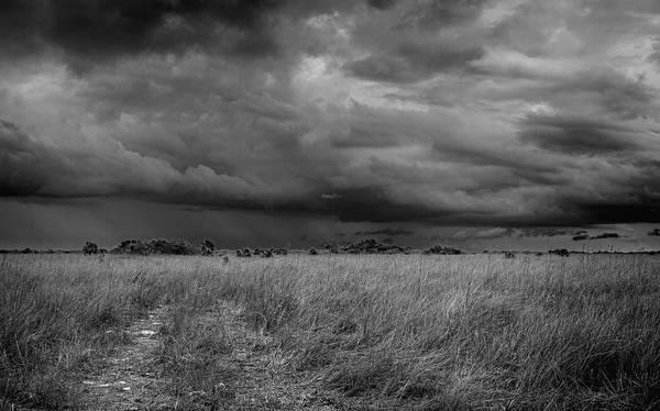 Photograph - Everglades 2433 by Rudy Umans