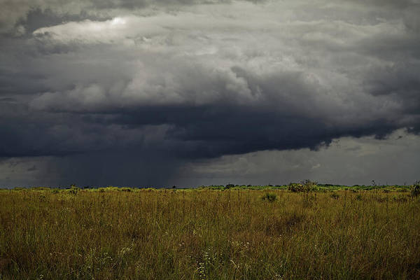 Photograph - Everglades 2440 by Rudy Umans