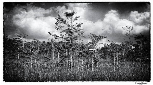Photograph - Everglades 4182bw by Rudy Umans