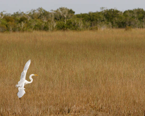 Photograph - Everglades 429 by Michael Fryd