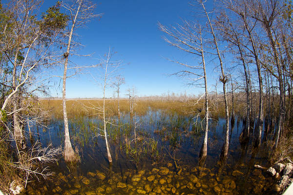 Photograph - Everglades 85 by Michael Fryd