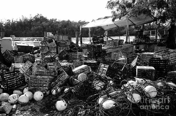 Crabbing Photograph - Everglades City Life by David Lee Thompson