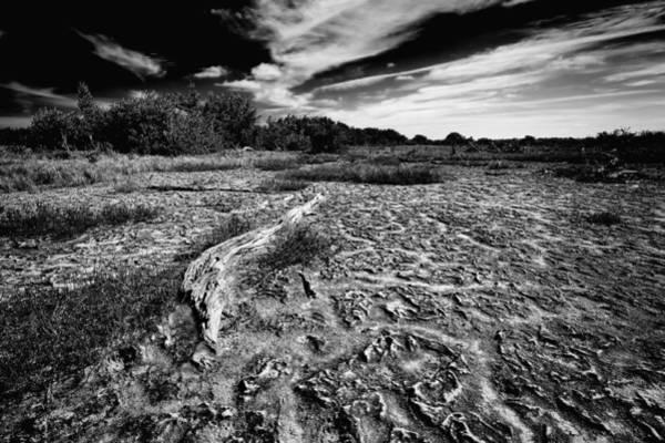 Photograph - Everglades Coastal Prairiesin B/w by Rudy Umans