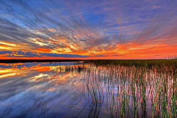 Everglades Sunset Art Print