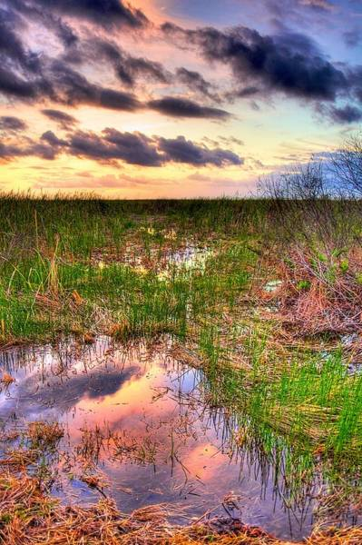 Wall Art - Photograph - Everglades Twilight by William Wetmore