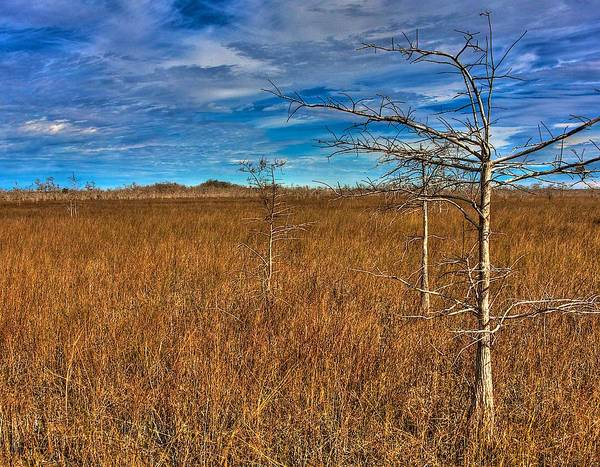 Wall Art - Photograph - Everglades by William Wetmore