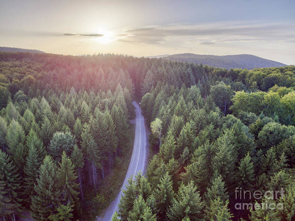 Photograph - Evergreen Forest From Above by Jelena Jovanovic