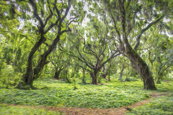 Digital Art - Evergreen II by Jon Glaser