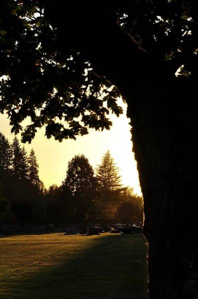 Photograph - Evergreen Memorial Park 4981 by Jerry Sodorff