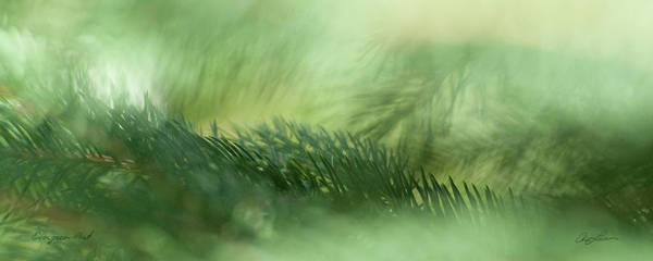 Photograph - Evergreen Mist by Ann Lauwers