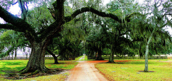 Alligator Alley Photograph - Evergreen Oak Alley by Angie Covey