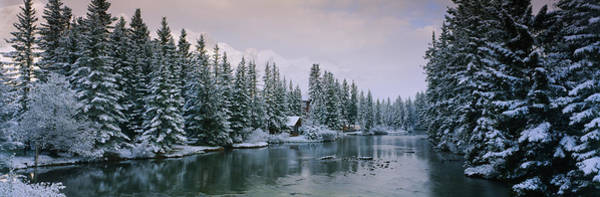 Canmore Photograph - Evergreen Trees Covered With Snow by Panoramic Images