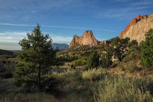 El Paso County Photograph - Evergreen Trees In The Garden Of The Gods by Bridget Calip