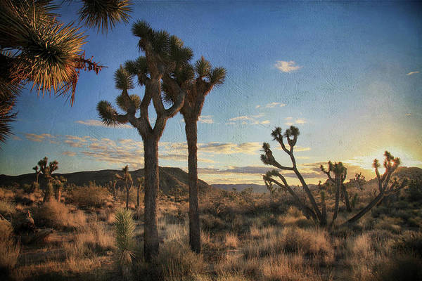 Joshua Tree National Park Wall Art - Photograph - Every Time We Touch by Laurie Search