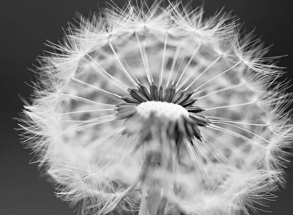 Photograph - Every Weed Is A Flower by Sue Collura