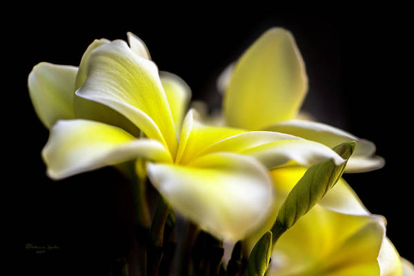Hawaiian Flower Photograph - Everything Is Looking Up by Marvin Spates