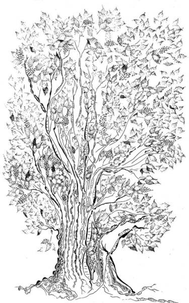 Drawing - Evolutionary Tree by Regina Valluzzi