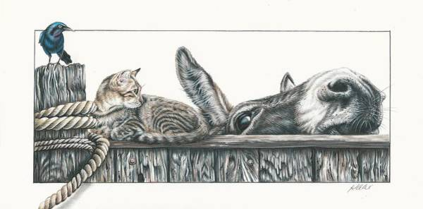 Tabby Drawing - Excuse Me by Katie McConnachie