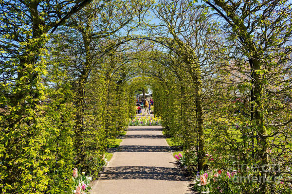 Holland Tunnel Wall Art - Photograph - Exit From The Tunnel, Keukenhof by Sinisa CIGLENECKI