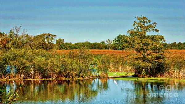 Photograph - Exner Marsh Nature Preserve  by Tom Jelen