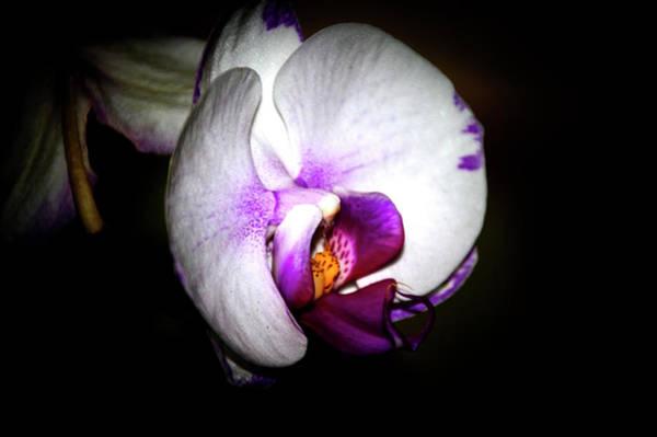 Photograph - Exotic Beauty by Judy Hall-Folde