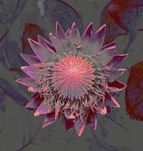 Mixed Media - Exotic Bloom by Susan Maxwell Schmidt