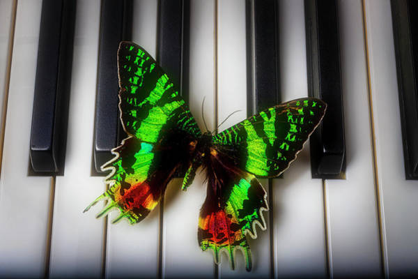 Wall Art - Photograph - Exotic Butterfly On Piano Keys by Garry Gay