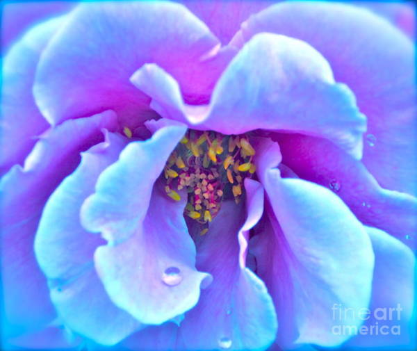 Wet Rose Wall Art - Photograph - Exotic Dancer by Gwyn Newcombe