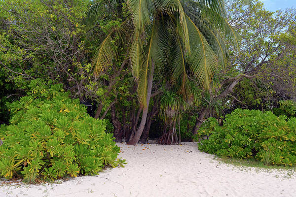 Photograph - Exotic Vegetation On The Beach In Maldives With Palm Trees by Oana Unciuleanu