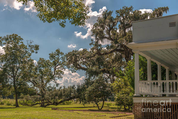 Photograph - Experience Mcleod Plantation by Dale Powell