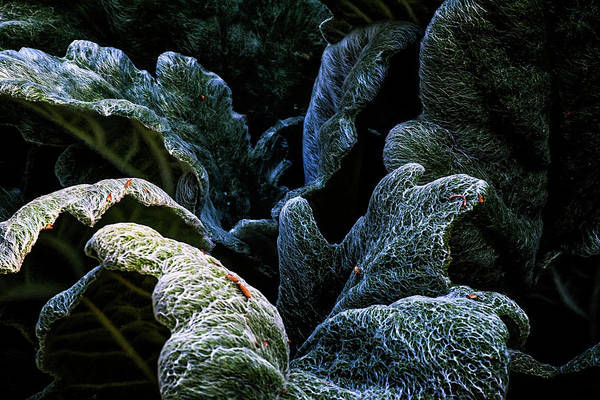 Wall Art - Photograph - Experiencing Green by Camille Lopez