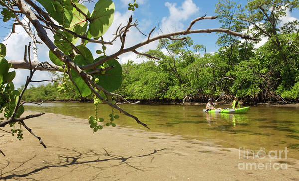 Wild Grape Photograph - Exploring South Florida's Wilderness - Father And Son Kayaking by Matt Tilghman