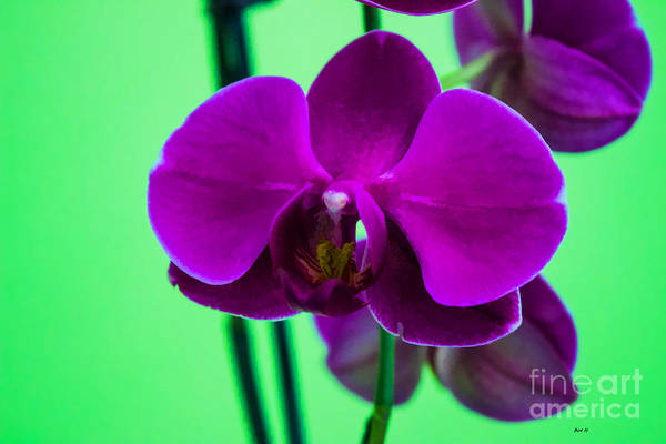 Exposed Orchid Art Print