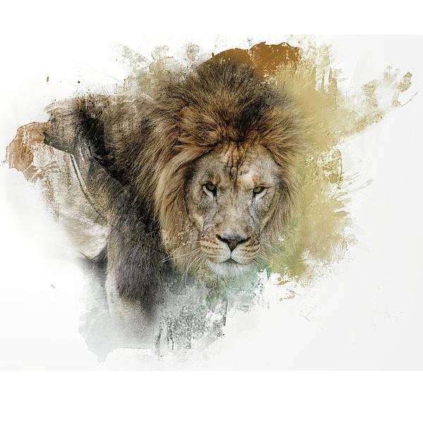 Photograph - Expressions Lion by Jai Johnson