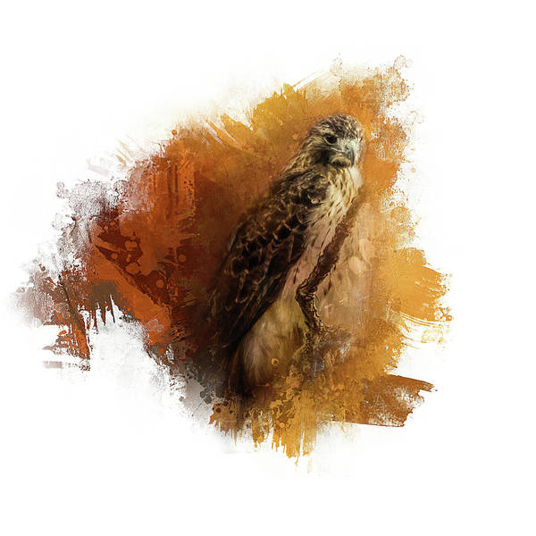 Photograph - Expressions Red Tail Hawk by Jai Johnson