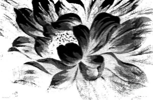 Painting - Expressive Black And White Abstract Floral A8816 by Mas Art Studio