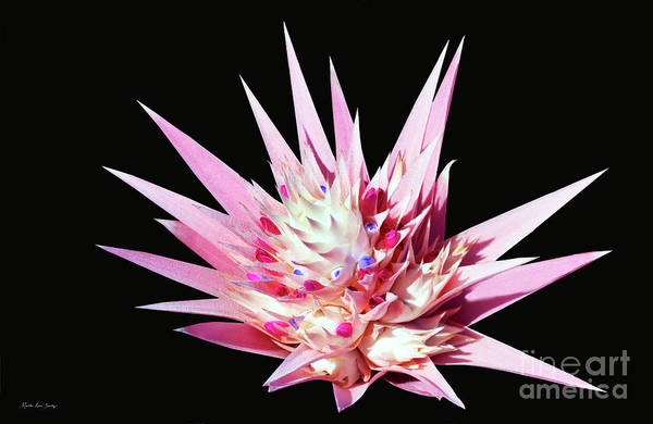 Digital Art - Expressive Bromeliad E3517 by Mas Art Studio