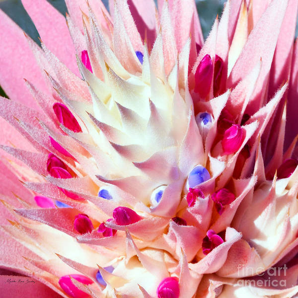 Photograph - Expressive Bromeliad Photo C3517 by Mas Art Studio