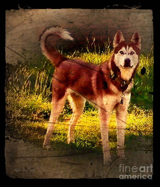 Photograph - Expressive Mixed Media Husky A4116 by Mas Art Studio