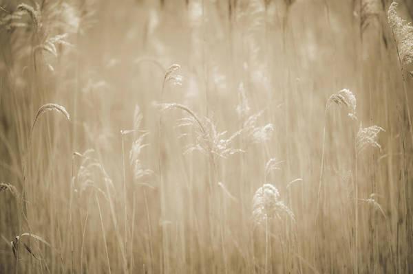 Photograph - Exuberance by John Whitmarsh