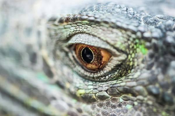 Photograph - Eye - 0162 by G L Sarti