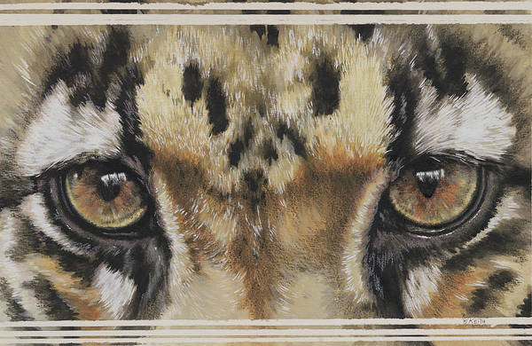 Wall Art - Painting - Clouded Leopard Gaze by Barbara Keith