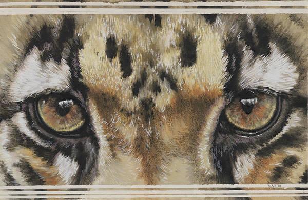 Clouded Leopard Gaze Art Print