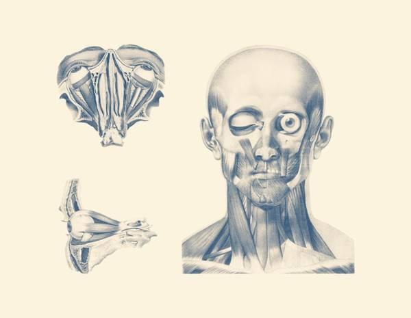 Nerves Drawing - Eye Diagram - Multiview - Vintage Anatomy Poster by Vintage Anatomy Prints